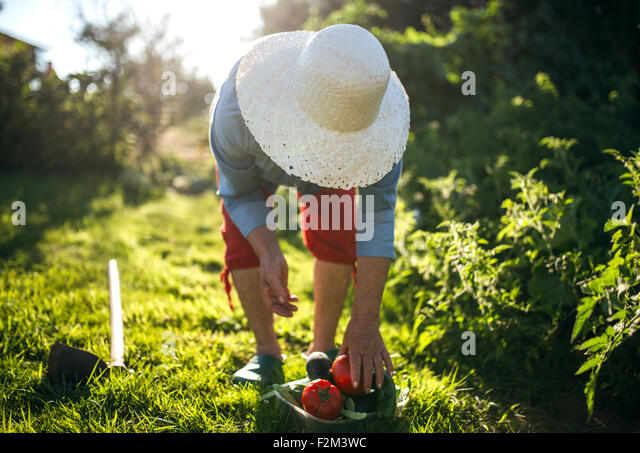 Senior woman with straw hat working in her garden - Stock-Bilder