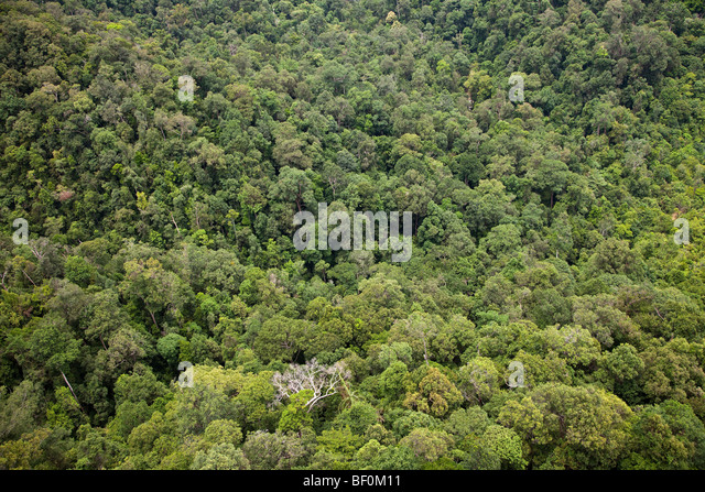 Aerial view of secondary forest canopy, Malaysia - Stock-Bilder