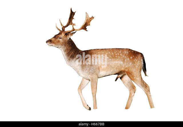 deer christian single men Sure, plenty of single christian men are floundering, right, we've heard it all before actually the complaining has been going on for decades the culture started blaming men for everything.