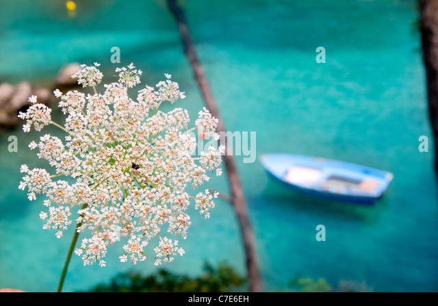 Balearic islands typical scene with wild carrot flowers and boat in turquoise Mediterranean - Stock Image