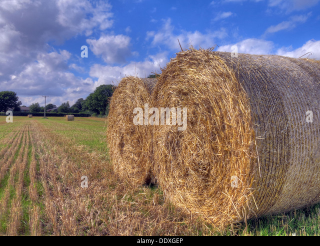 Bales of hay in a field in Cheshire England UK summer sunshine and a blue sky - Stock Image