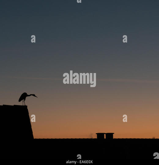 Germany, North Rhine-Westphalia, Dusseldorf, Bird at sunset - Stock Image