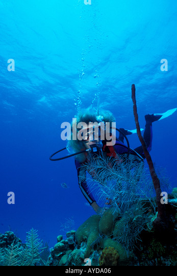 Grand Cayman woman underwater diving with red finger sponges Caribbean - Stock Image