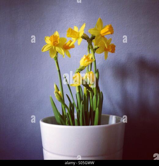 Home garden...easy living - Stock Image