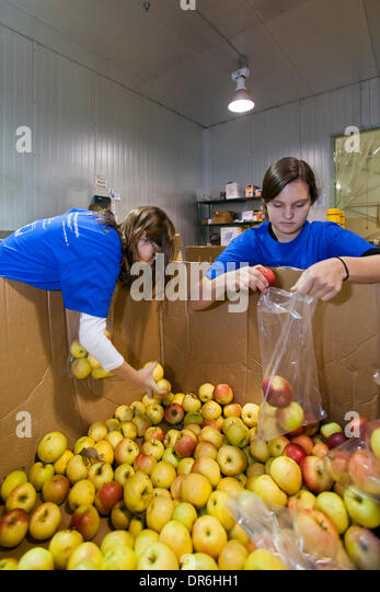 Warren, Michigan - Children package apples to distribute to the needy at Gleaners Food Bank on the Martin Luther - Stock Image