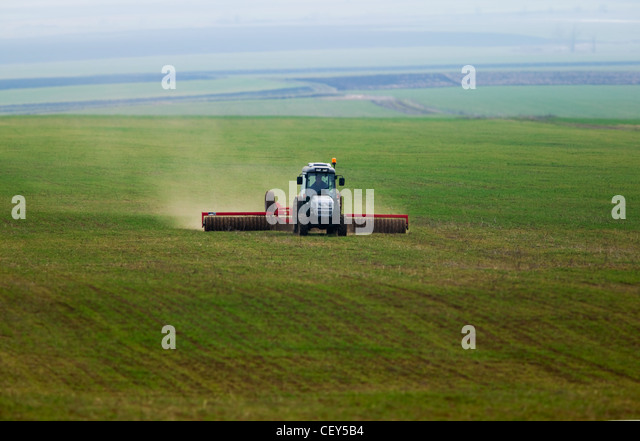 A little tractor working in a green field of corn - Stock Image
