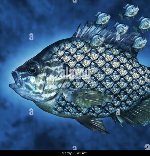 Group Leadership Management business concept as a big fish carrying a group of smaller fish as scales on the aquatic - Stock-Bilder