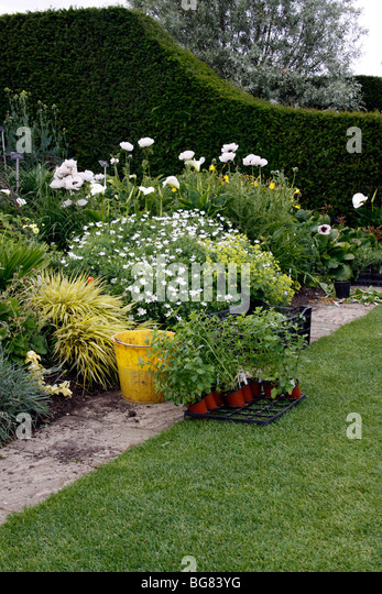 Dig Plant Shrubs Stock Photos Dig Plant Shrubs Stock