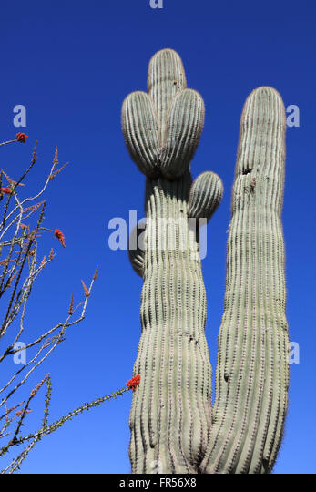 Red Cactus Flowers Stock Photos & Red Cactus Flowers Stock ...