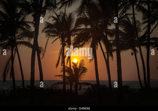 Sunset at Arossim Beach, Southern Goa, India. Palm trees silhouetted. - Stock-Bilder
