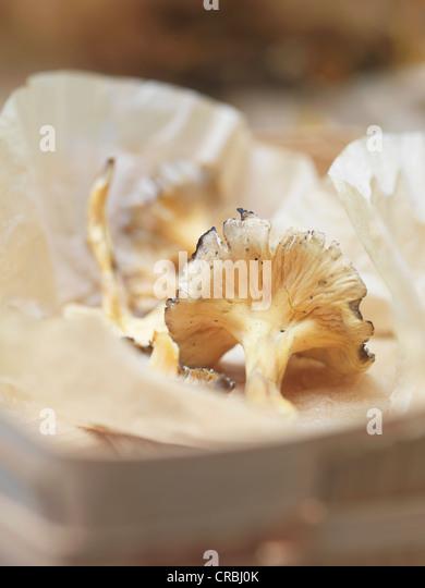 Close up of punnet of morel mushrooms - Stock-Bilder