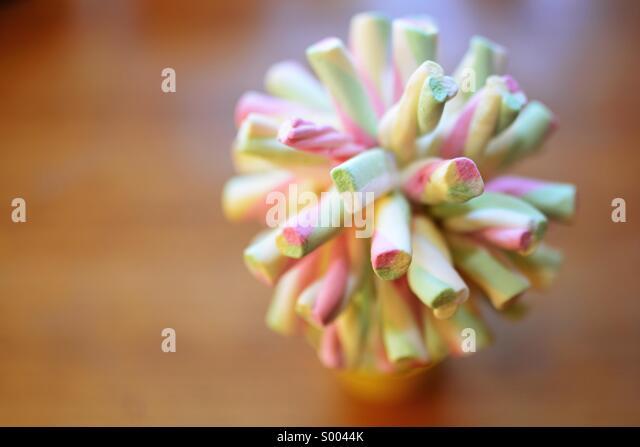 Marshmallow confectionary tree - Stock Image