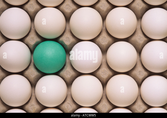 Rows of white eggs in an egg carton with one green one - Stock Image