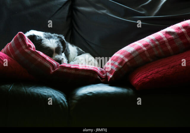 settee and cushion stock photos   settee and cushion stock cleaning a sofa bed cover cleaning a sofa uk