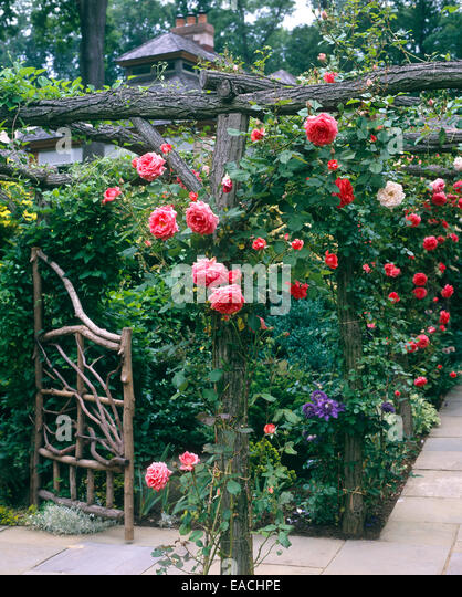 garden with roses and slate pathways - Stock Image
