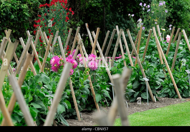 Stakes stock photos stakes stock images alamy for Perennial wood