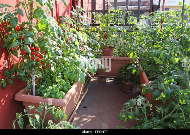 Vegetable garden terrace stock photos vegetable garden for Terrace vegetable garden