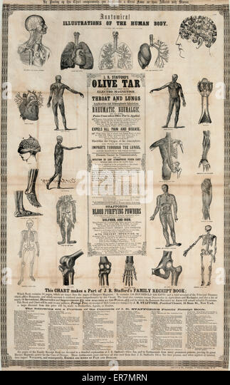 Anatomical, illustrations of the human body. Date 1857 Southern District of N.Y. - Stock Image