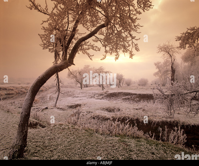 GB - WORCESTERSHIRE:  Winter along River Avon near Fladbury - Stock Image