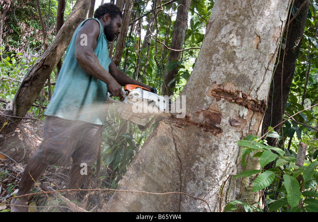 Logging in East New Britain Island, Papua New Guinea, Monday 22nd September 2008. - Stock Image