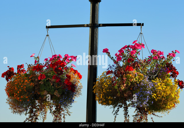 Hanging Flower Baskets Calgary : Flower baskets stock photos images