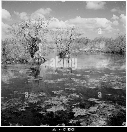 Tropical Chevrolet Miami Florida >> 1950s Florida Stock Photos & 1950s Florida Stock Images - Alamy
