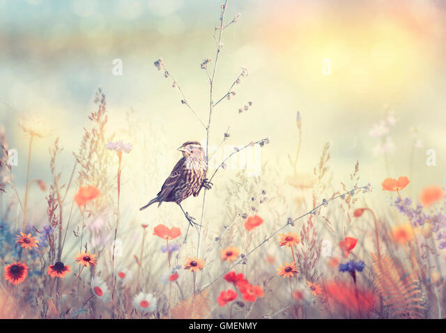 Field with wild flowers and a bird at sunset - Stock Image