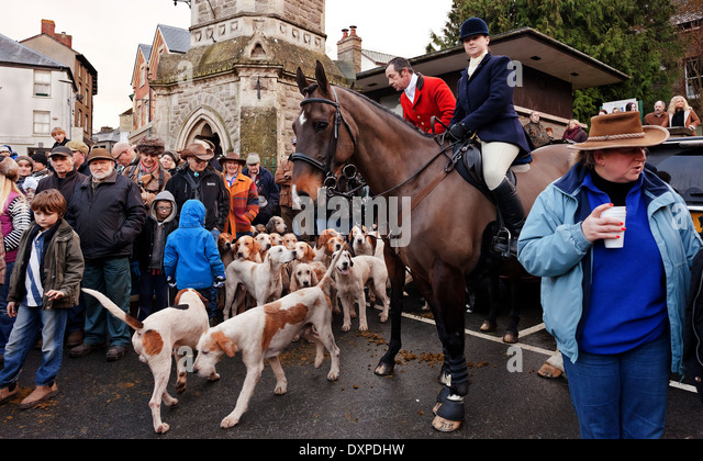 Fox hounds and crowd - Stock Image