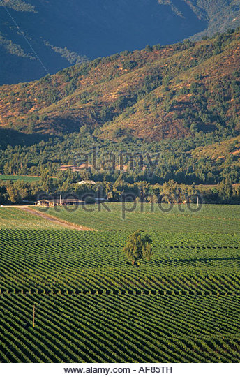 Vineyards near Casablanca, Chile - Stock Image