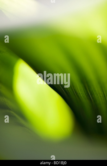 Extreme close-up of leaf, abstract - Stock-Bilder