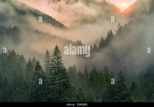 Sunrise through fog in mountains near Opal Creek, Oregon - Stock Image