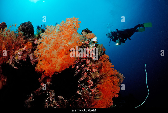 Diving at Coral Reef Raja Ampat Irian Jaya West Papua Indo Pazific Indonesia - Stock Image