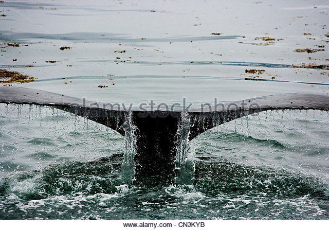 Humpback whale, Icy Strait, Alaska - Stock Image