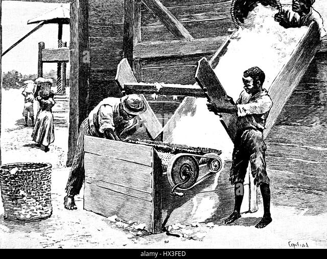 Illustration featuring several African-American slaves using a manual cotton gin to process a cotton crop in the - Stock Image
