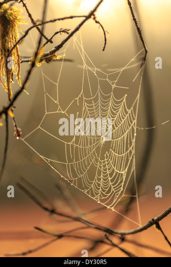 A spider web glistens in the morning light. - Stock Image