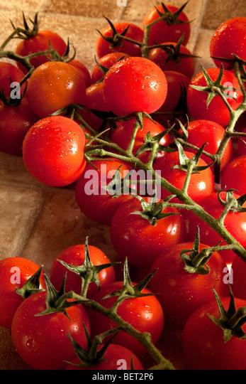 The tomato (Solanum lycopersicum) - Stock Image