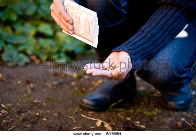 A man sowing seeds - Stock Image