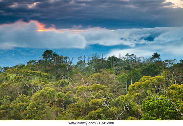 Sunset and cloud forest in Altos de Campana national park, Republic of Panama. - Stock-Bilder