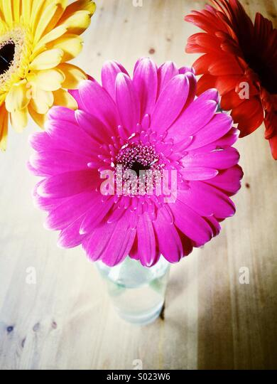 Cheerful flowers in vase - Stock Image
