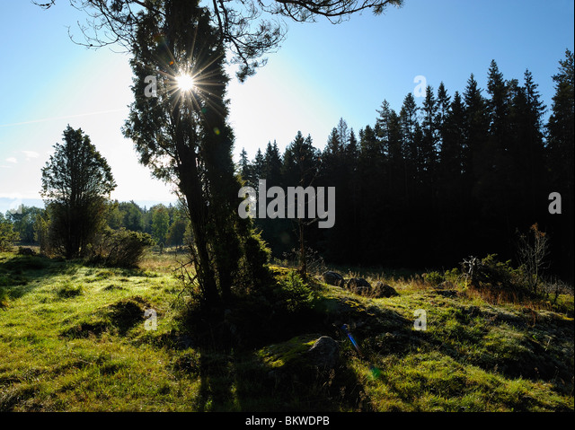 Sunlight over meadow - Stock Image
