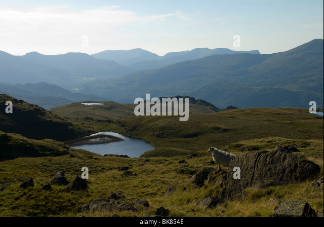 The Nantlle Ridge from Ysgafell Wen in the Moelwyn range, Snowdonia, North Wales, UK - Stock Image