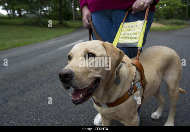 Charity Walking Dogs Elderly