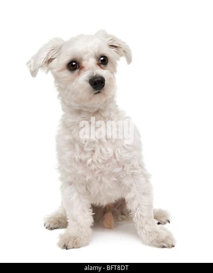 Dog Walking Sideways Head Tilted