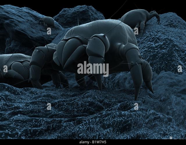 dust mite - Stock Image
