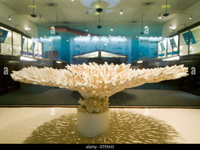 Marine Invertebrates at the Natural History Museum - Stock Image