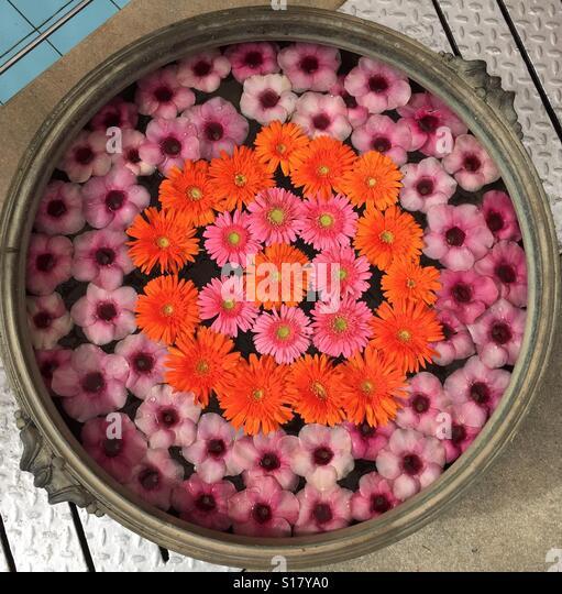 Floral arrangement of Gerbera daisies and Allamanda floating in water, India - Stock-Bilder