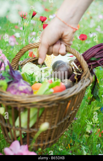 Hand picking up wooden basket of fresh produce - Stock-Bilder
