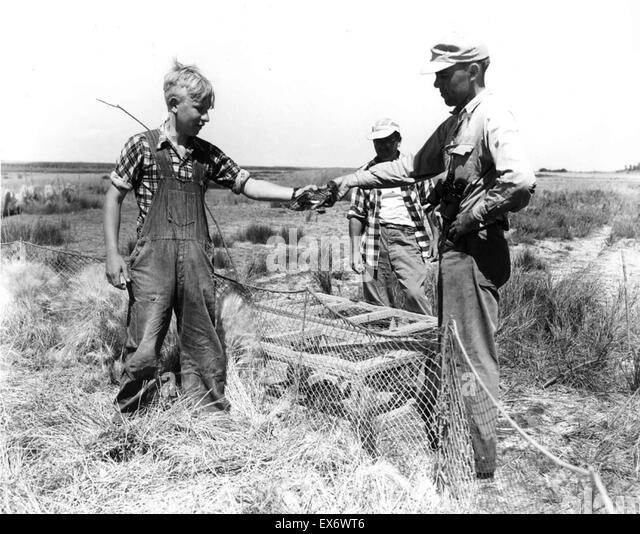 Two adult men with one younger boy working in field. USA depression era 1938 - Stock-Bilder