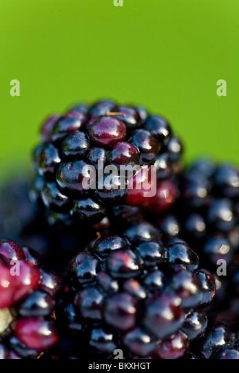 Close up of blackberries - Stock-Bilder