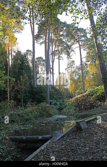 Man Cave Cannock : Walks autumn uk forest stock photos